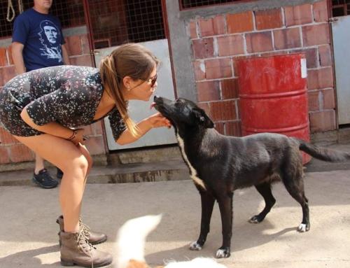 Eigenares van Trimsalon helpt dieren in nood