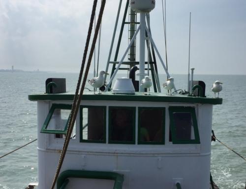Garnaalvissen met de Crangon: de ideale uitstap op zee!