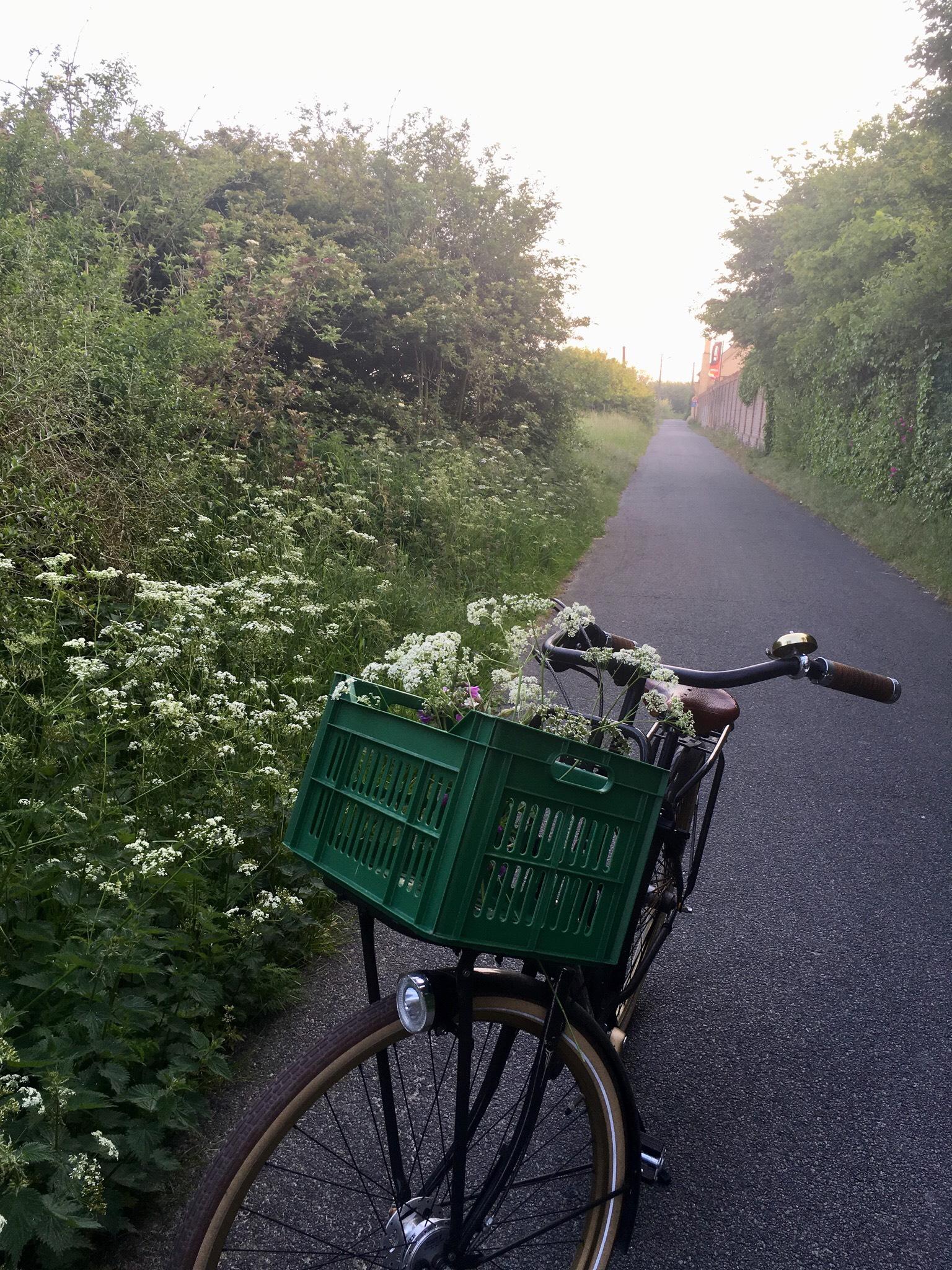 Wilde bloemen Oostende
