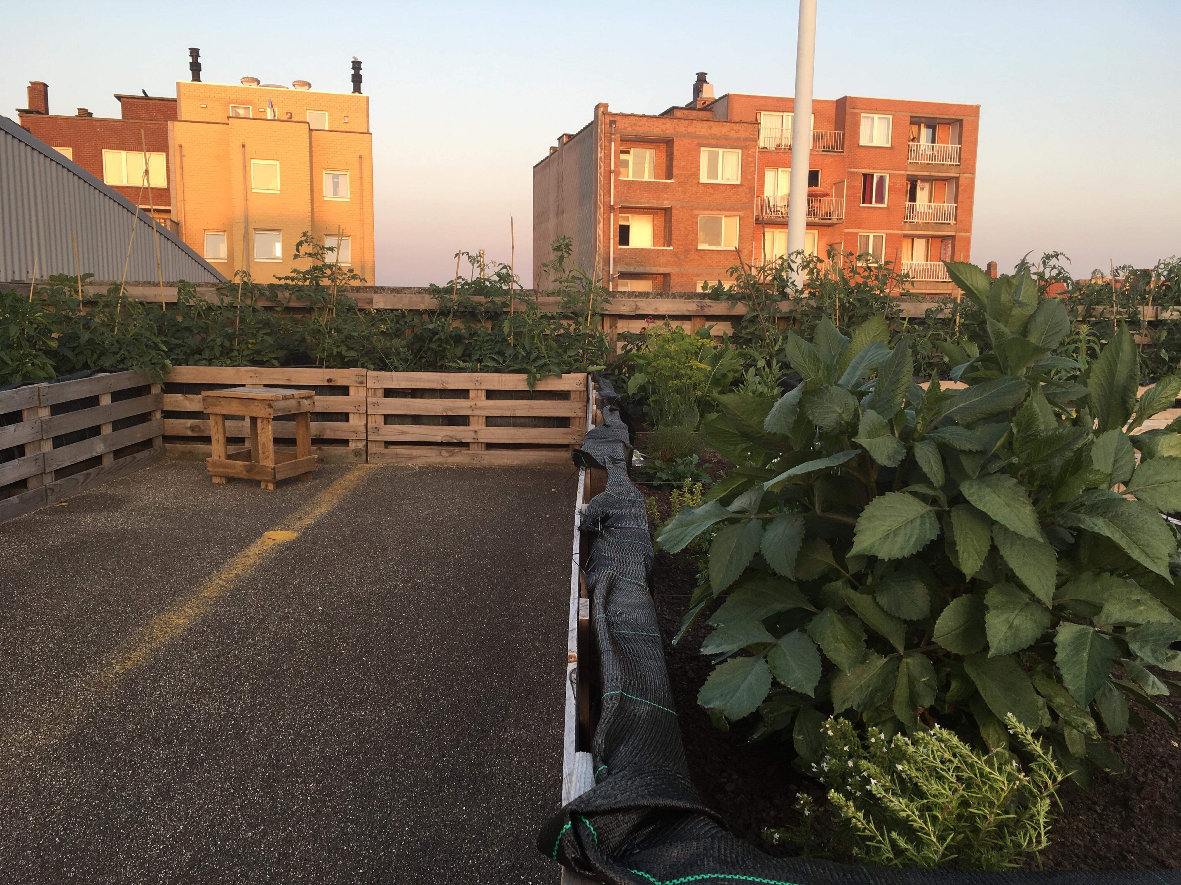 Torenoogst moestuinieren op een dak